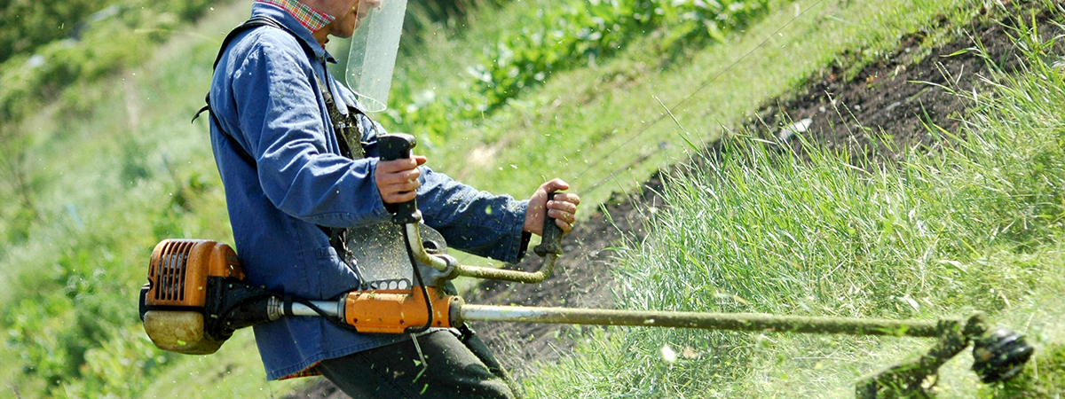 Empresas de jardineria en sevilla simple viveros jardn for Empresas de jardineria